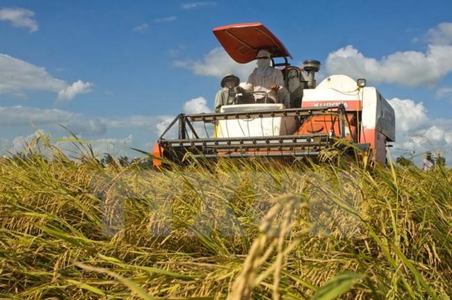 """Xuất khẩu gạo 6 tháng cuối năm: Vẫn chờ tín hiệu """"tăng mua"""""""