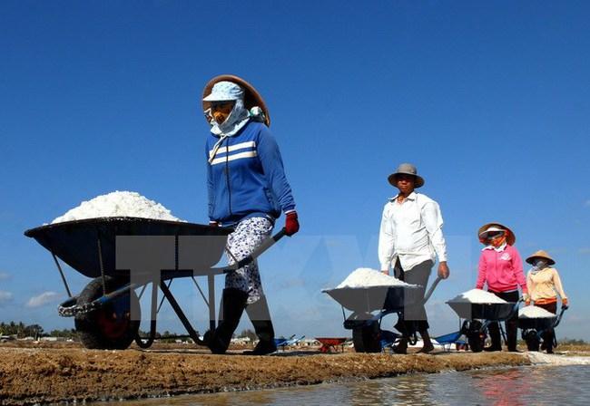 TP. Hồ Chí Minh hỗ trợ diêm dân tiêu thụ 95.000 tấn muối tồn kho