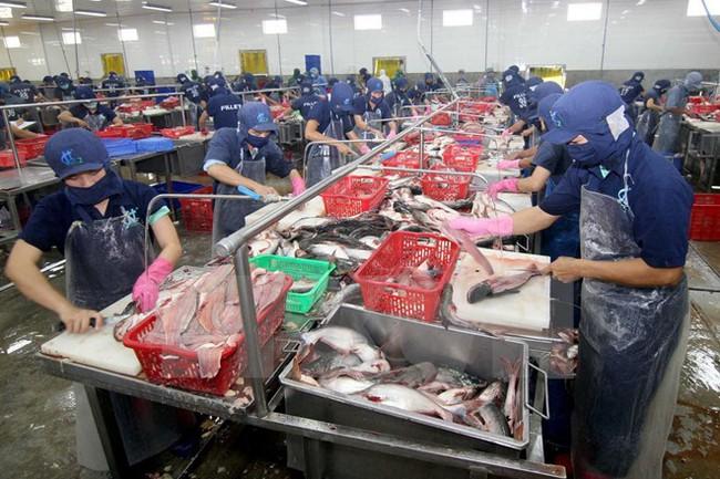 Xuất khẩu thủy sản đối mặt nhiều khó khăn do thiếu nguyên liệu