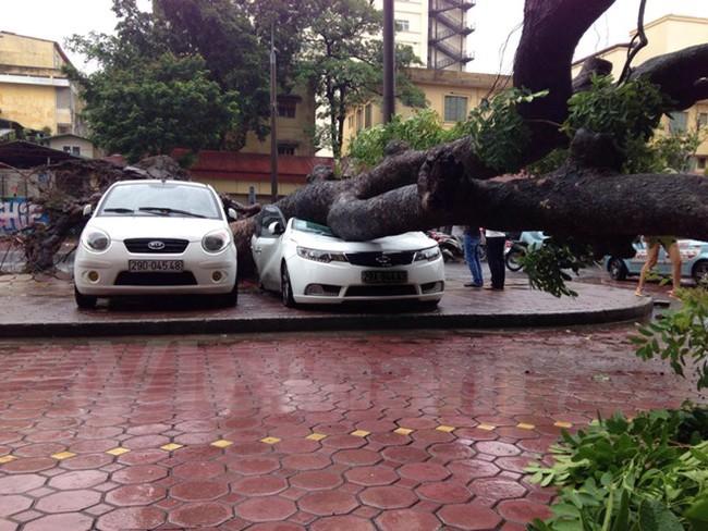 Hà Nội: Xà cừ bất ngờ đổ sập đè bẹp một xe ôtô ven đường