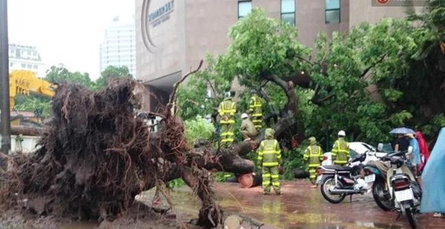 Những nguyên tắc đi đường cần nhớ khi có gió giật mạnh ngày mưa bão