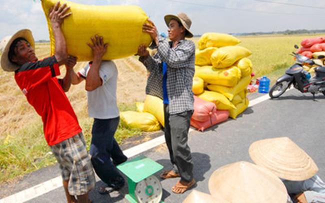 Xuất khẩu gạo tăng mạnh về lượng nhưng giá giảm