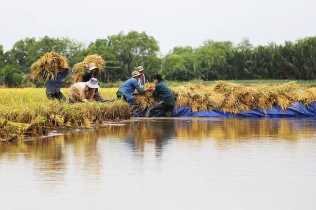 Ăn Tết Đoan Ngọ, nhìn lại nông nghiệp Việt Nam tháng 5