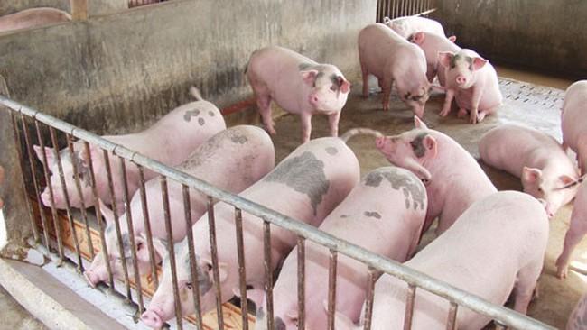 Bộ Công Thương đưa ra giải pháp tiêu thụ sản phẩm thịt lợn đang tồn trong dân