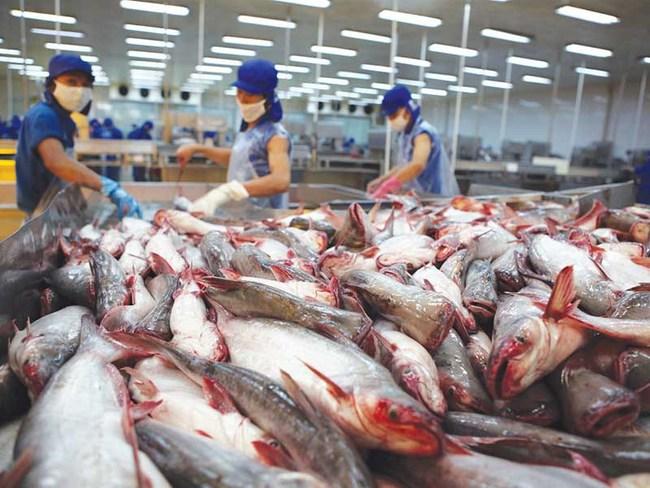 Bài học đắt giá cho xuất khẩu hải sản Việt