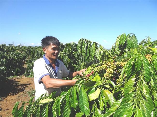 Xuất khẩu cà phê sẽ cải thiện trong quý IV?
