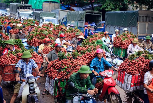 Bắc Giang 'gặt' vụ vải thiều thành công nhất trong 6 thập kỷ