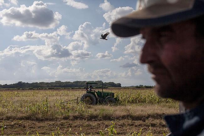 Những cánh đồng hoang hóa tiêu điều vì khủng hoảng kinh tế ở Venezuela