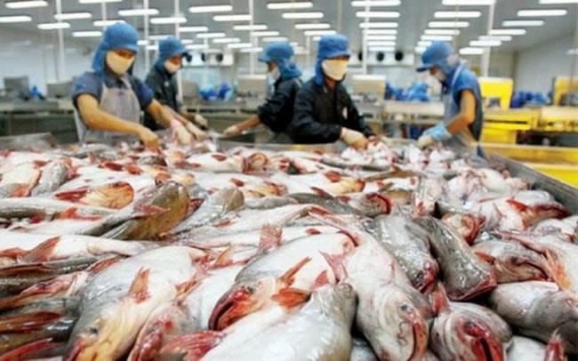 Sản lượng cá tra tháng 1 đạt trên 71.000 tấn