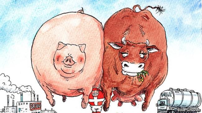 Tại sao có diện tích nhỏ, ít dân và chi phí nhân công rất cao nhưng Đan Mạch lại là 1 cường quốc nông nghiệp?