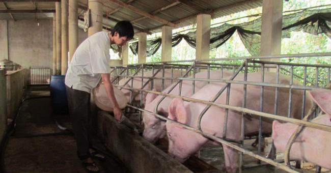 Giá lợn hơi trong nước kém khả quan, Bộ Nông nghiệp khuyến cáo người dân không nên tái đàn