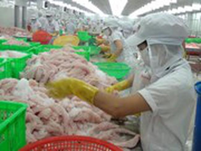 Giá cá tra tăng cao, người nuôi vẫn dè dặt
