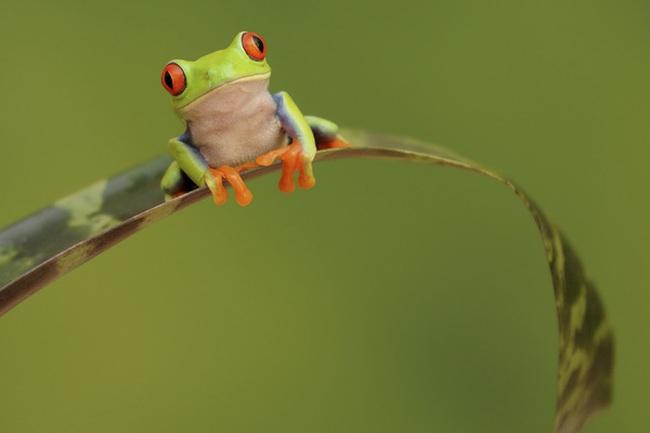 """Câu chuyện về chú ếch """"nghễnh ngãng"""" và bài học sống: Cứ làm tới đi, cứ thất bại đi, sao phải quan tâm đến những lời đố kỵ dè bỉu"""