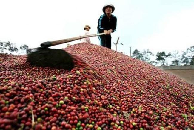 Xuất khẩu nông sản Việt Nam đạt hơn 15 tỷ USD năm 2016