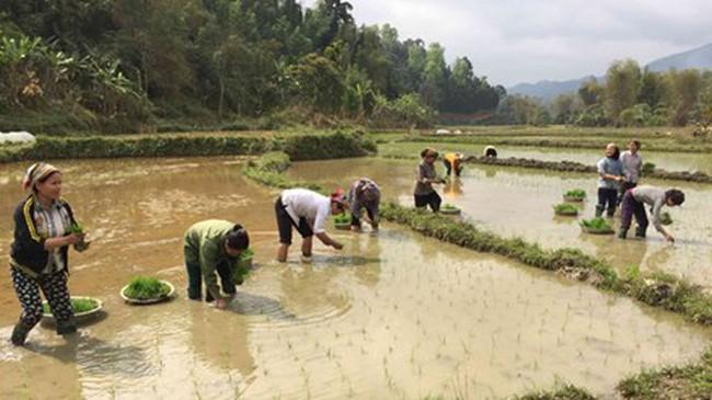 Nông dân lao đao vì áp lực giá phân bón