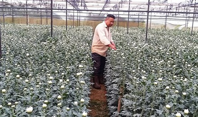 Nông dân xuất khẩu hoa sang Nhật, Hàn