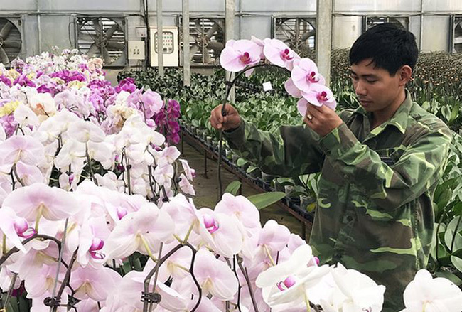 """Xuất khẩu hoa Đà Lạt: """"Tắc"""" vì giống bản quyền"""