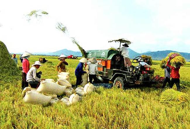 Nông nghiệp Hùng Hậu (SJ1) không thể phân phối hết lượng cổ phiếu dự kiến