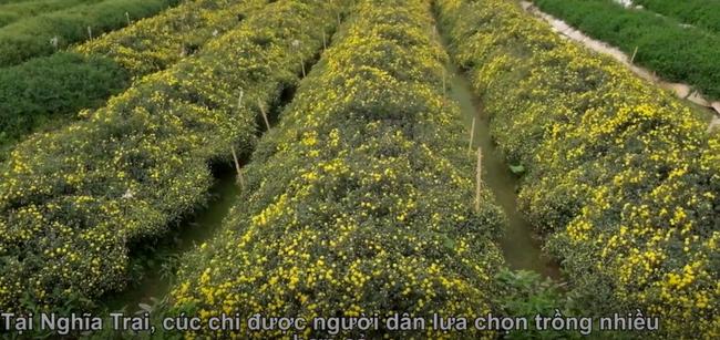 'Đột nhập' làng trồng cây dược liệu ngót nghét 1000 tuổi ở Hưng Yên