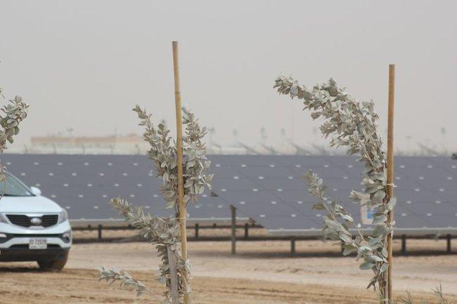 UAE dự kiến tiết kiệm được 192 tỷ USD nhờ dùng năng lượng sạch