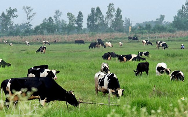 ANZ: GDP Việt Nam năm 2017 sẽ tăng 6,4% nhờ triển vọng sáng sủa của ngành nông nghiệp