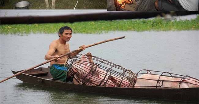 Video: Người dân chèo thuyền đưa lợn lên cao, đốt lửa sưởi ấm gà trong lũ