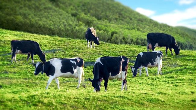GTN Foods hoàn tất việc nâng tỷ lệ sở hữu tại Vilico lên 65%