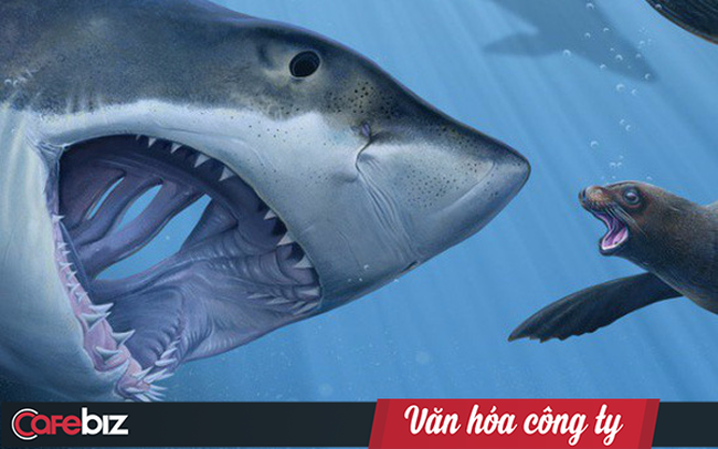 """Tencent: Văn hóa kiểu """"tử cung"""" của cá mập mẹ, cá mập con chưa ra đời sẽ cắn chết anh chị em để trở thành cá thể sống sót duy nhất"""