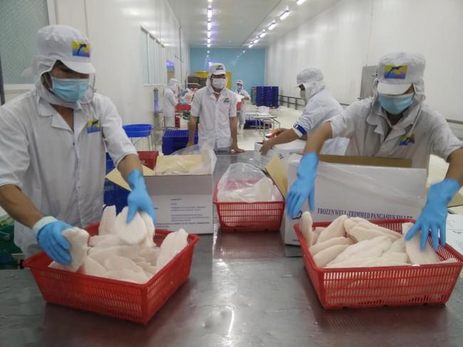 Sản lượng nuôi giảm sâu trong khi tồn kho cạn kiệt đẩy giá cá tra tăng liên tục