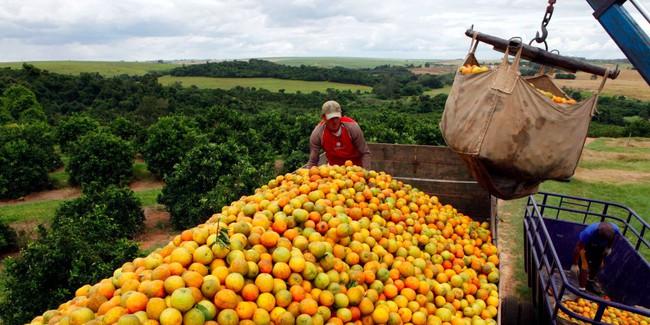 Giá cam Mỹ tăng vọt sau siêu bão thế kỷ trên Đại Tây Dương