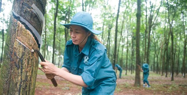 Cao su Đồng Phú (DPR): 9 tháng lãi 222 tỷ đồng cao gấp 2 lần cùng kỳ, vượt 16% kế hoạch cả năm