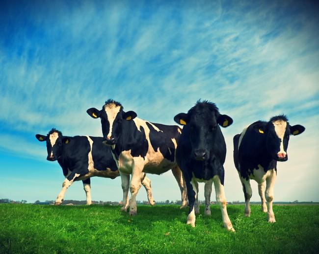 Nông nghiệp sạch đã thay đổi GTNfoods như thế nào? - ảnh 1