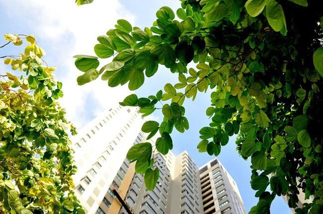 Công trình xanh - Lời giải cho việc giảm hiệu ứng đảo nhiệt đô thị