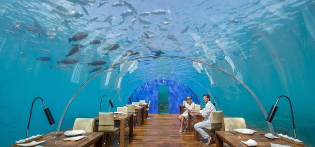 Có gì bên trong nhà hàng dưới nước đầu tiên của châu Âu: Cho khách hàng trải nghiệm trọn vẹn về cả thể chất và trí tuệ