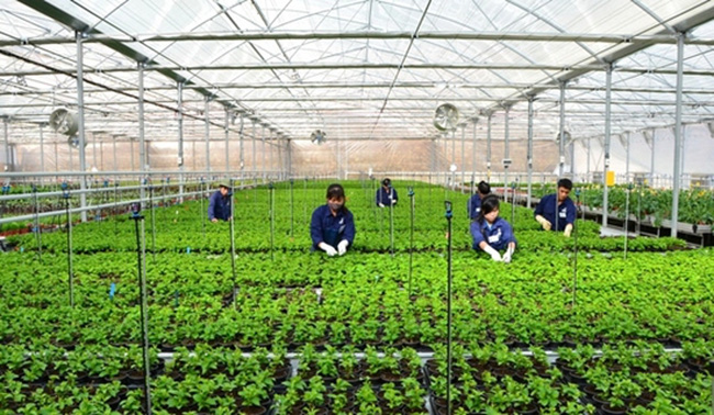 NHNN quy định lãi suất cho vay nông nghiệp công nghệ cao thấp hơn từ 0,5 - 1,5%/năm