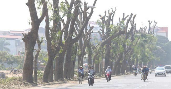 Đường Phạm Văn Đồng chìm trong nắng bụi khi bắt đầu chặt hạ 1300 cây xanh