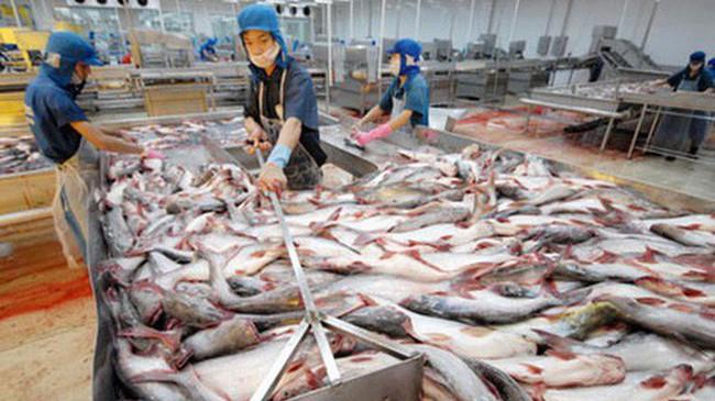 Kim ngạch xuất khẩu cá tra có thể đạt 1,8 tỷ USD trong 2017