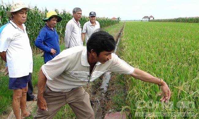 Thiệt hại hàng trăm triệu đồng do mua nhầm lúa giống