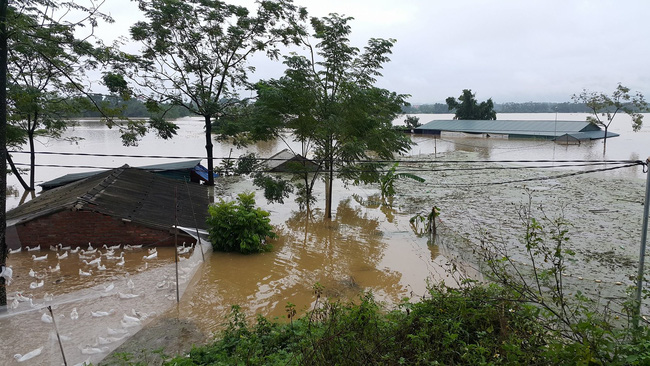 """Huyện Quốc Oai, Hà Nội: Nước lũ tràn đê, người dân thức trắng đêm """"sơ tán"""" lợn gà, cây trái"""
