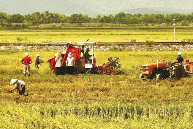 """Doanh nghiệp nông nghiệp """"tử vong"""" nhiều hơn là thành lập mới"""