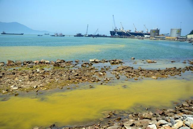 Vì sao tảo nở hoa xuất hiện liên tục trên vùng biển ở Huế?