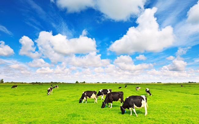 Vừa mua xong 16,5 triệu cổ phiếu VNM, F&N Dairy tiếp tục đăng ký mua thêm gần 21,8 triệu cổ phiếu