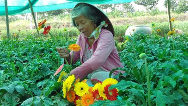 Tây Nam bộ: Mất mùa hoa Tết