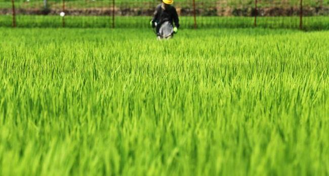 Để thoát khỏi cảnh 'đói ăn', Nhật Bản mở rộng hạn điền bằng mô hình đặc biệt này