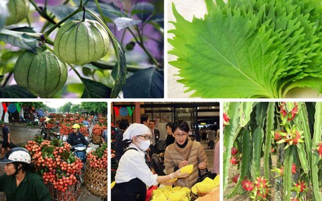 """Nhiều rau, quả giá """"bèo"""" ở Việt Nam nhưng đắt đỏ ở Nhật"""