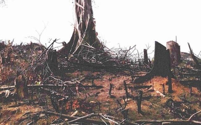 Thủ tướng yêu cầu Bình Định báo cáo vụ phá rừng ở An Lão