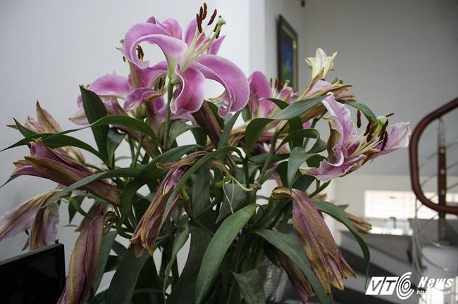 Bị lừa mua hoa 'dỏm' dịp Tết, người chơi hoa khóc dở, mếu dở