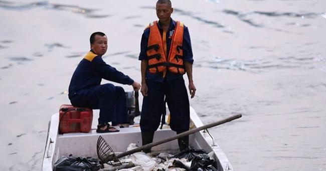 Hà Nội: Sau đúng 1 năm, cá lại chết trắng mặt hồ Hoàng Cầu