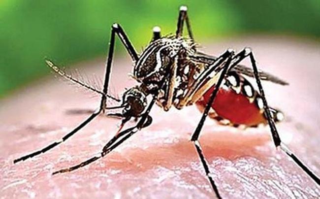 Cách phân biệt sốt xuất huyết và sốt rét