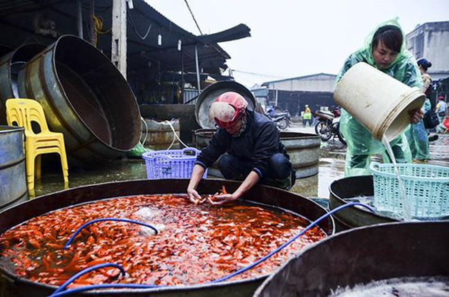 Chợ cá vàng lớn nhất Thủ đô tấp nập trước ngày ông Táo
